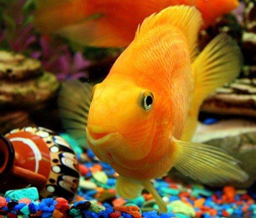 Как распознать болезнь у рыбки.