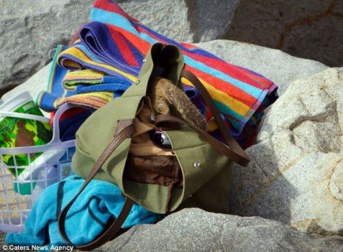 Белка-воришка (6 фото)