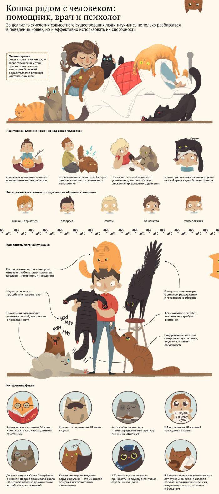 Коты и кошки в жизни человека