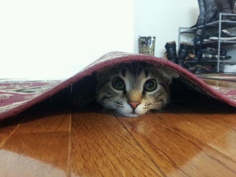 Котенок под кроватью картинки