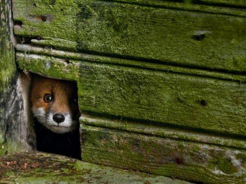 Лучшие фотографии National Geographic Russia из мира животных в феврале (13 фото)