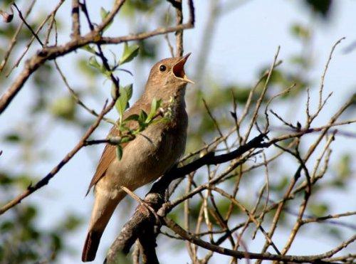 Видео: Орнитотерапия - лечение пением птиц