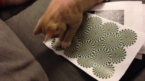 Оказывается, кошки могут видеть оптические иллюзии