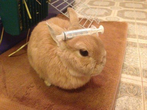 Позитив дня - Кролик Винни (28 фото)
