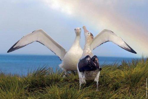 Чудеса полярной природы (24 фото)