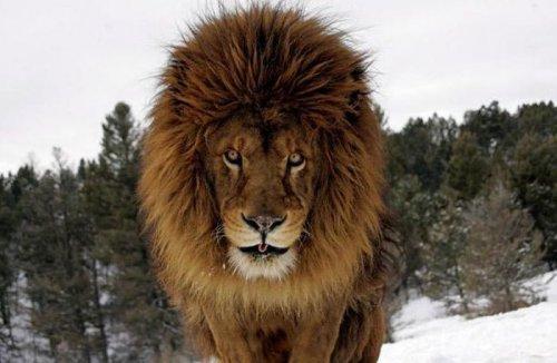 Дикие звери Джонатана Гриффитса (15 фото)