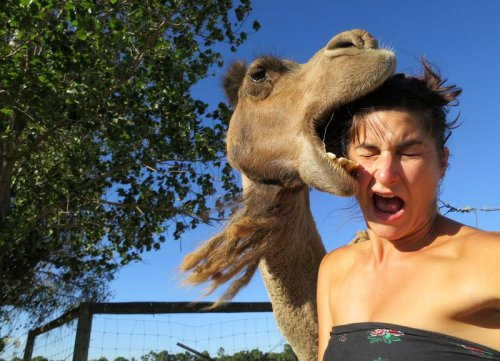 Верблюд укусил назойливую туристку за голову