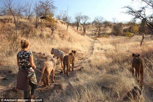 На прогулку вместе с хищником (12 фото)