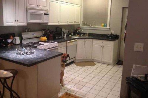 Пёс-фотомодель сдал в аренду квартиру своих хозяев (6 фото)