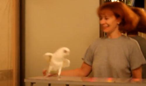 """Юмор: Попугай танцует """"Ламбаду"""""""