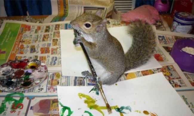 Белка рисует картины и продает на eBay (3 фото)