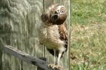 Юмор: Смешные птицы