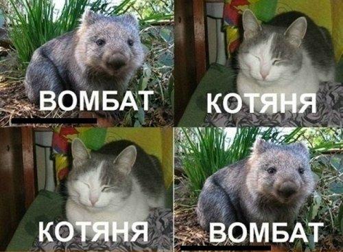"""Новое изложение популярной песни """"Комбат"""" группы """"Любэ""""(5 фото)"""