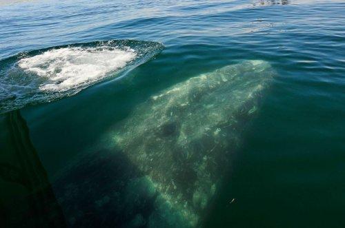 Незабываемая встреча с китами (22 фото)