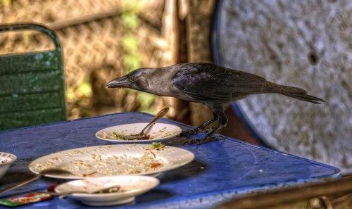 Красивые и забавные птицы (20 фото)