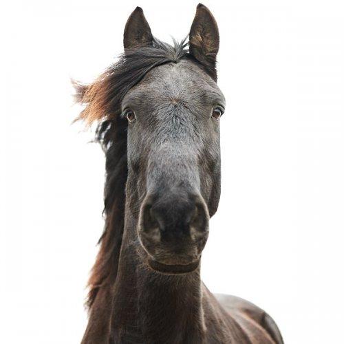 Портреты животных от Мортена Колдби (11 фото)