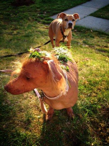Потешные и милые пёсики (40 фото)
