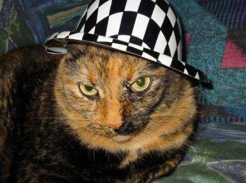 Подборка фотографий кошек в шляпках и шапочках (50 фото)
