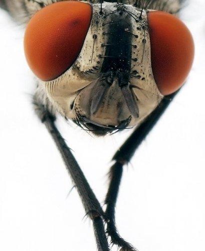Удивительные макрофотографии насекомых (14 фото)