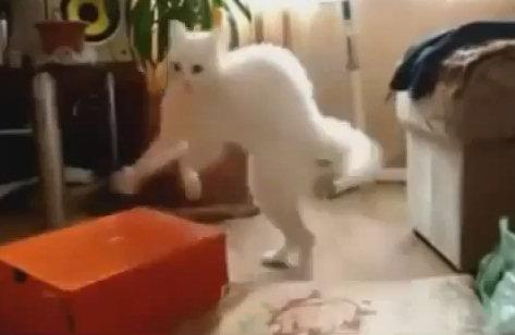 Юмор: Кошко-приколы