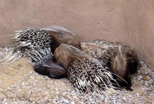 Спящие зверушки (25 фото)