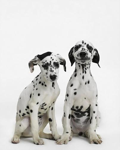 Фотографии собак от Sharon Montrose  (27 фото)
