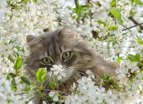 Животные и цветы (27 фото)