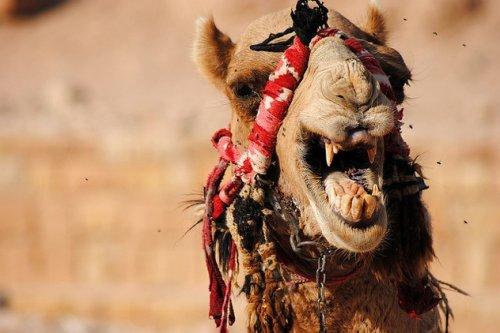 Десять животных с ужасающими зубами 10 (фото)