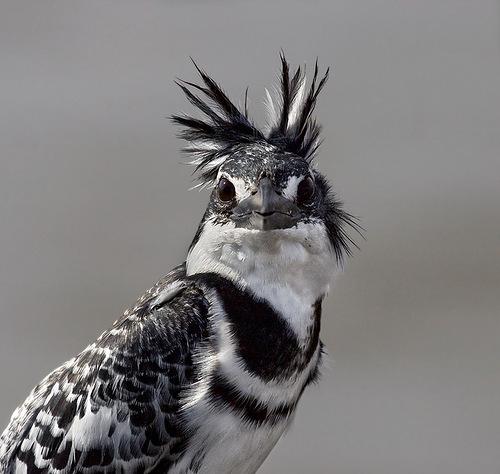 Красивые пташки (27 фото)