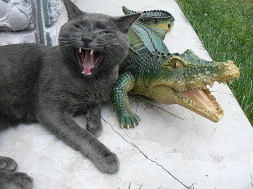 Забавы от животных (40 фото)