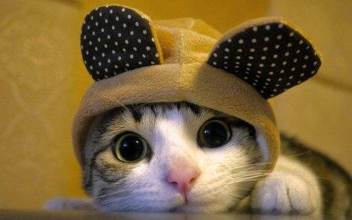 Позитив в фотографиях с кошками (30 фото)