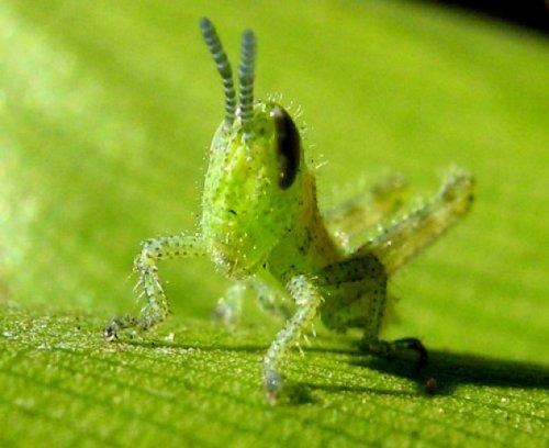 Десять самых миловидных насекомых (10 фото)