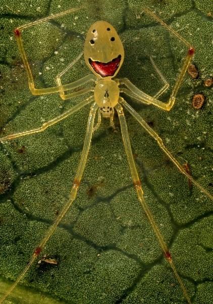 карте Построить приметы паук на теле ходит растворится следовательно всосется