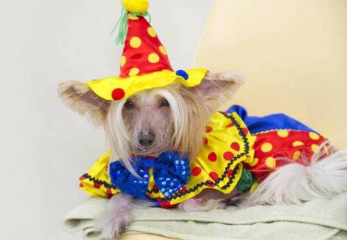 Самый избалованный пёс (11 фото)