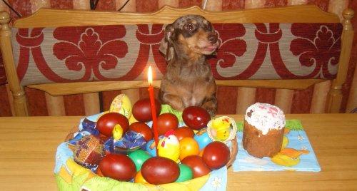 Фото дня: К празднику Пасхи!