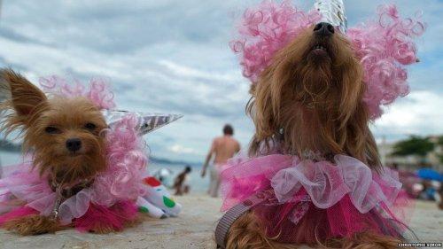 Смешные и милые собаки (45 фото)