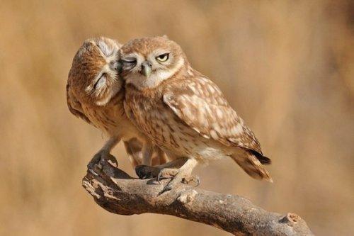 Давайте целоваться! (20 фото)