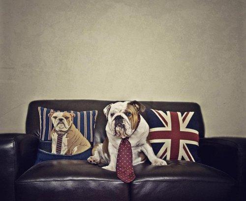 Фотограф Серена Ходсон и её четвероногие питомцы (28 фото)