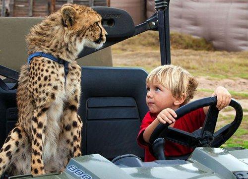 Замечательная дружба детей и гепарда (4 фото)