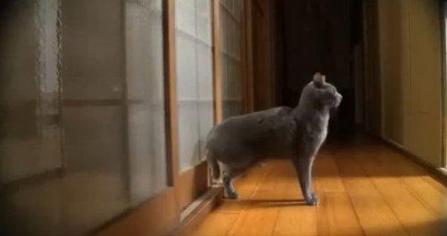 Юмор: Кошачьи выкрутасы
