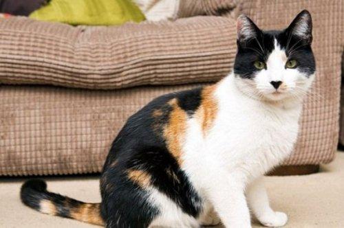В Великобритании нашли чрезвычайно редкого кота (3 фото)