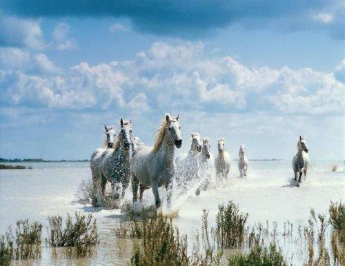 Красивая подборка лошадей (30 фото)