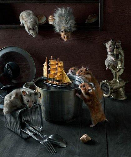 Юмор:  Жизнь забавных хомяков (5 фото)
