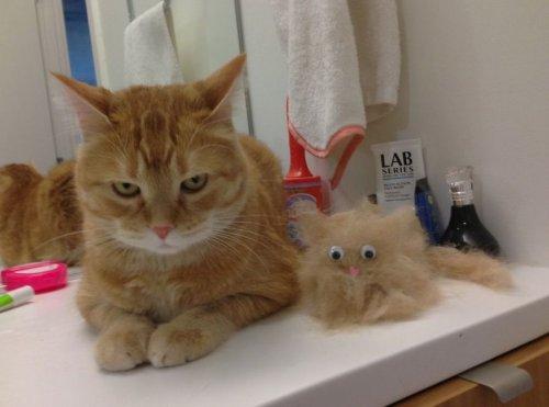 Смешные и милые кошки (35 фото)