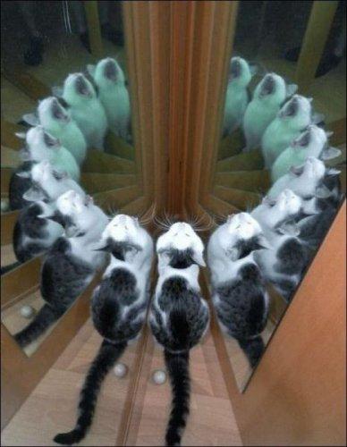 Зоопозитивчик (35 фото)