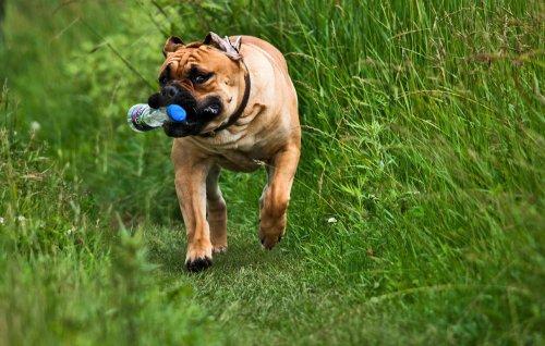 Наши друзья-собаки (30 фото)