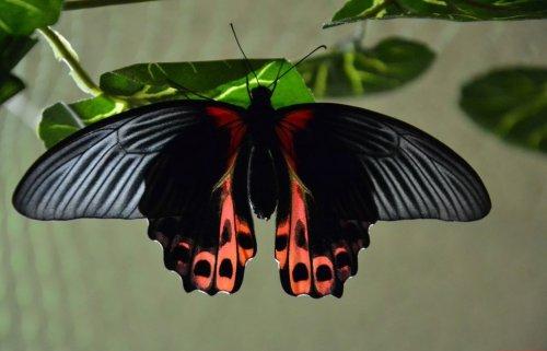 Летние прелестницы (40 фото)