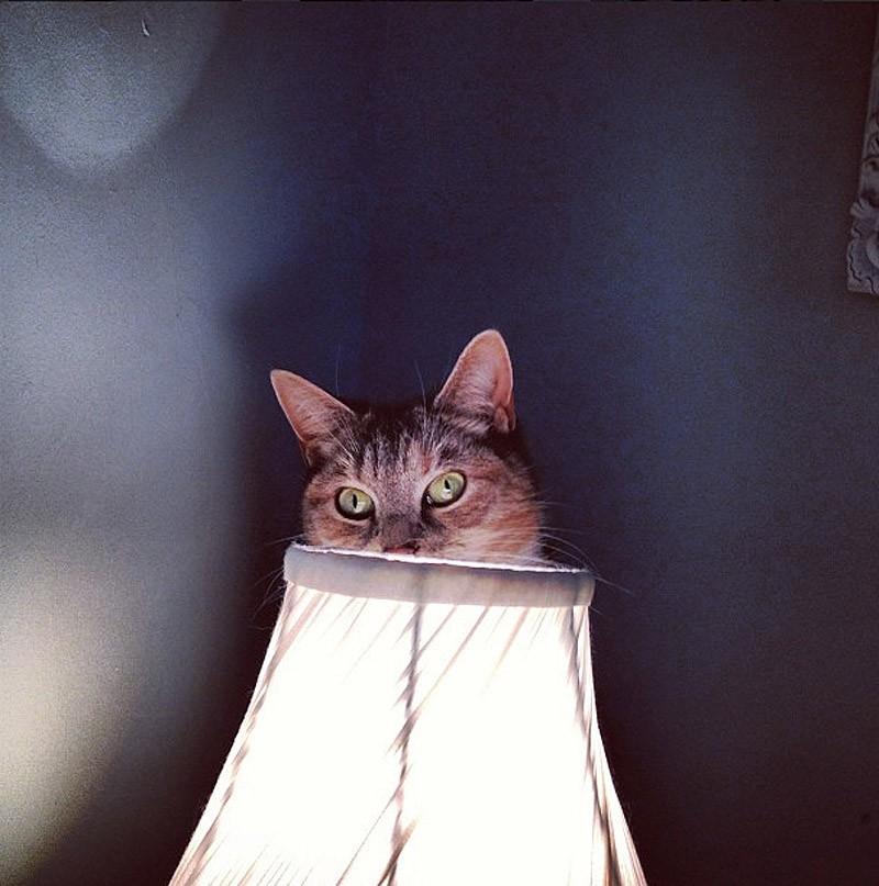 Прячущийся кот картинка
