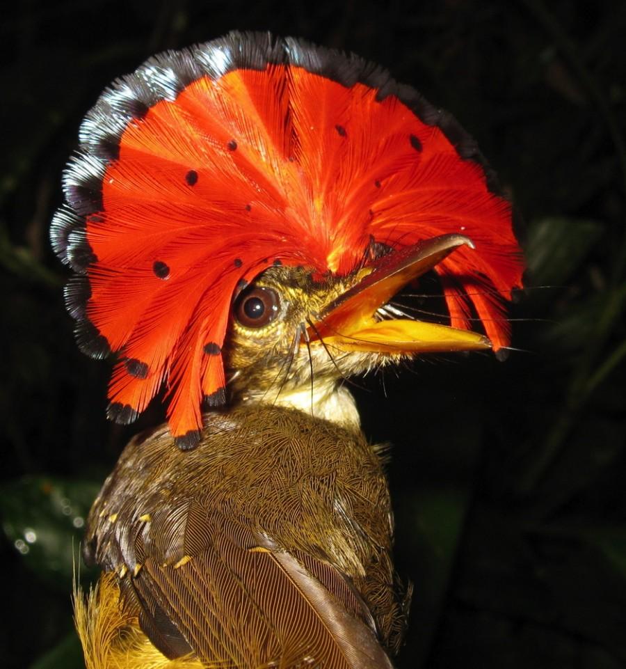 врубель проявил название и фото всех птиц в мире несмотря что