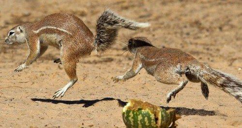 Сражение за арбуз (8 фото)